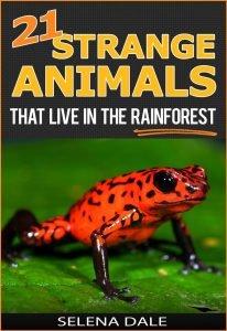 21 Strange Animals That Live in the Rainforest