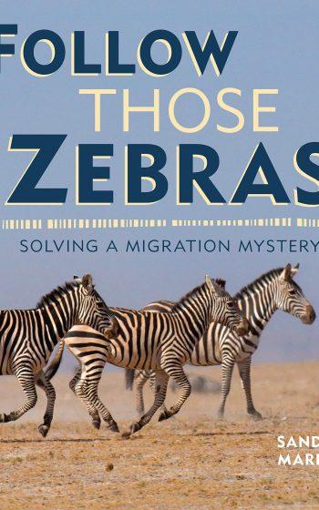 Follow Those Zebras